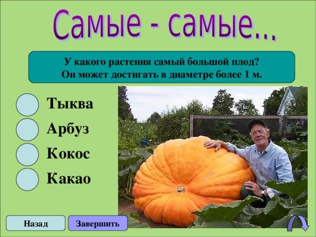 У какого растения самый большой плод? Он может достигать в диаметре более 1 м. Тыква Арбуз Кокос Какао Назад Завершить