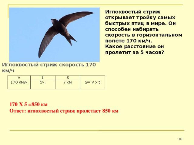 Иглохвостый стриж открывает тройку самых быстрых птиц в мире. Он способен набирать скорость в горизонтальном полёте 170 км/ч. Какое расстояние он пролетит за 5 часов?  Иглохвостый стриж скорость 170 км/ч V 170 км/ч t S 5ч. S = V х t ? км 170 Х 5 =850 км Ответ: иглохвостый стриж пролетает 850 км
