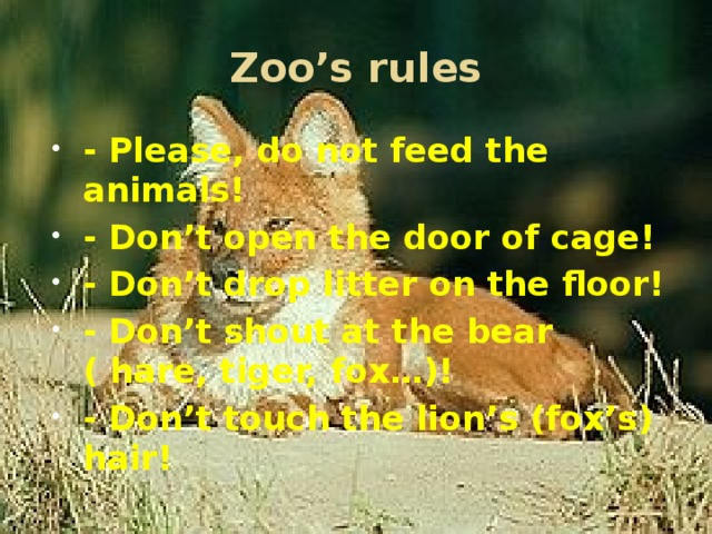 Zoo's rules