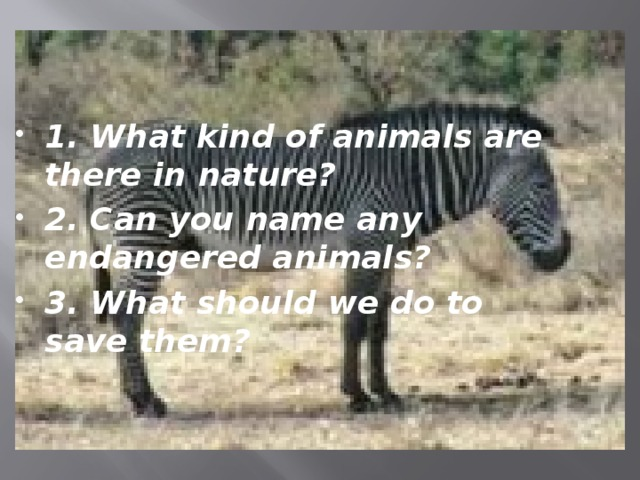 1. What kind of animals are there in nature? 2. Can you name any endangered animals? 3. What should we do to save them?