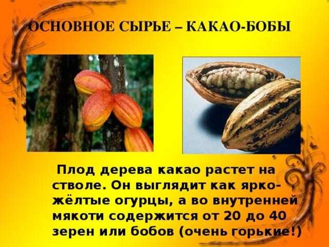Основное сырье – какао-бобы    Плод дерева какао растет на стволе. Он выглядит как ярко-жёлтые огурцы, а во внутренней мякоти содержится от 20 до 40 зерен или бобов (очень  горькие!)