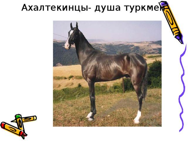 Ахалтекинцы- душа туркмен