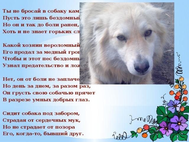 Ты не бросай в собаку камень, Пусть это лишь бездомный пес, Но он и так до боли ранен, Хоть и не знает горьких слез.  Какой хозяин вероломный Его продал за медный грош? Чтобы и этот пес бездомный Узнал предательство и лож.  Нет, он от боли не заплачет, Но день за днем, за разом раз, Он грусть свою собачью прячет В разрезе умных добрых глаз.  Сидит собака под забором, Страдая от сердечных мук, Но не страдает от позора Его, когда-то, бывший друг.