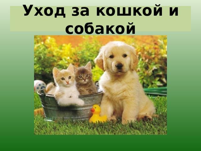 Уход за кошкой и собакой
