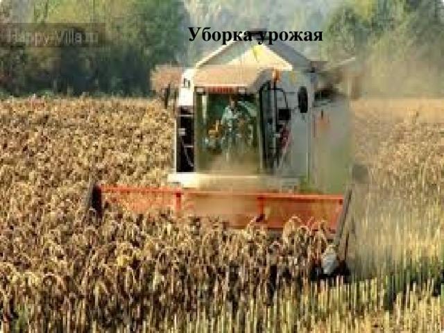 Уборка урожая