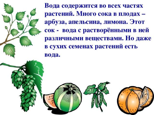 Вода содержится во всех частях растений. Много сока в плодах – арбуза, апельсина, лимона. Этот сок - вода с растворёнными в ней различными веществами. Но даже в сухих семенах растений есть вода.