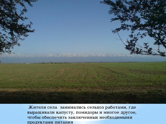 Жители села занимались сельхоз работами, где выращивали капусту, помидоры и многое другое, чтобы обеспечить заключенных необходимыми продуктами питания