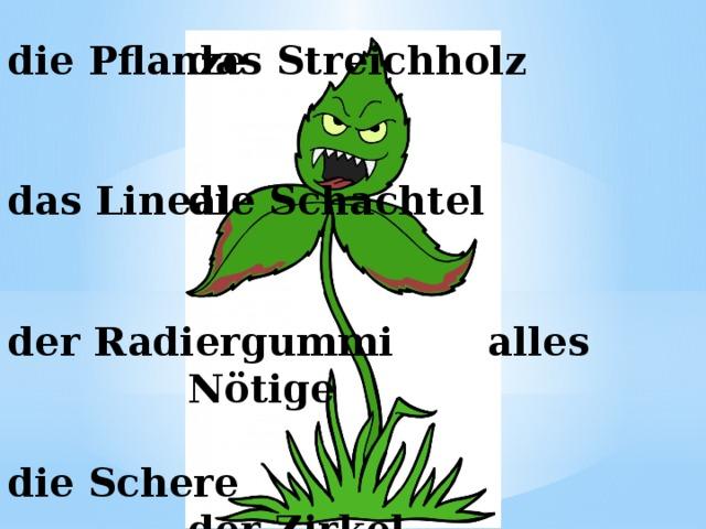 die Pflanze    das Streichholz    die Schachtel    alles Nötige    der Zirkel       das Lineal    der Radiergummi   die Schere