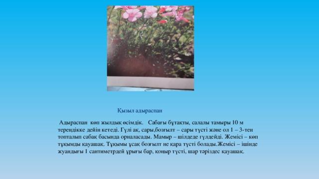 Қызыл адыраспан  Адыраспан көп жылдық өсімдік. Сабағы бұтақты, салалы тамыры 10 м тереңдікке дейін кетеді. Гүлі ақ, сары,бозғылт – сары түсті және ол 1 – 3-тен топталып сабақ басында орналасады. Мамыр – шілдеде гүлдейді. Жемісі – көп тұқымды қауашақ. Тұқымы ұсақ бозғылт не қара түсті болады.Жемісі – ішінде жуандығы 1 сантиметрдей ұрығы бар, қоңыр түсті, шар тәріздес қауашақ.