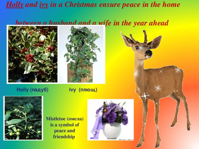 Holly and ivy in a Christmas ensure peace in the home  between a husband and a wife in the year ahead  Holly ( падуб) Ivy ( плющ) Mistletoe ( омела ) is a symbol of peace and friendship