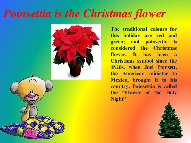 """Poinsettia is the Christmas flower  The traditional colours for this holiday are red and green; and poinsettia is considered the Christmas flower. It has been a Christmas symbol since the 1820s, when Joel Poinsett, the American minister to Mexico, brought it to his country. Poinsettia is called the """"Flower of the Holy Night"""""""