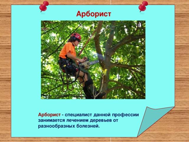 Арборист   Арборист - специалист данной профессии занимается лечением деревьев от разнообразных болезней.
