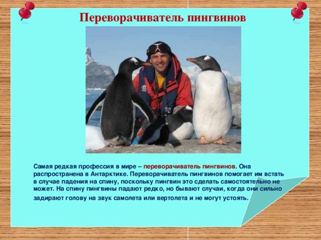 Переворачиватель пингвинов Самая редкая профессия в мире – переворачиватель пингвинов . Она распространена в Антарктике. Переворачиватель пингвинов помогает им встать в случае падения на спину, поскольку пингвин это сделать самостоятельно не может. На спину пингвины падают редко, но бывают случаи, когда они сильно задирают голову на звук самолета или вертолета и не могут устоять .