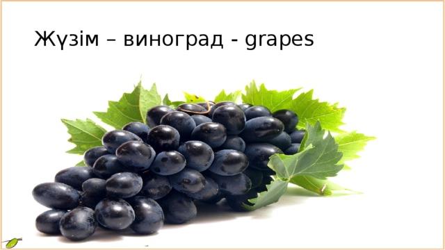 Жүзім – виноград - grapes
