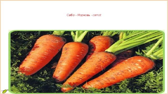 Сәбіз – Морковь - carrot