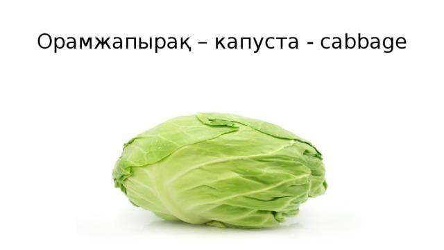 Орамжапырақ – капуста - cabbage