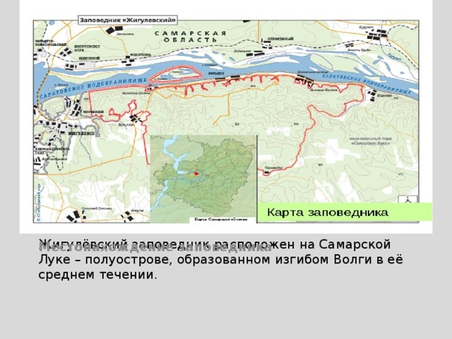 Местонахождение заповедника Жигулёвский заповедник расположен на Самарской Луке – полуострове, образованном изгибом Волги в её среднем течении.