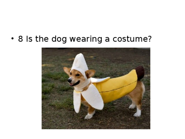 8 Is the dog wearing a costume?