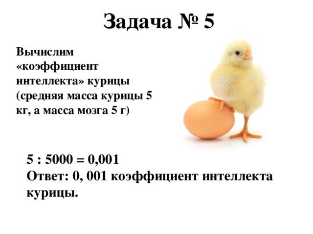 Задача № 5 Вычислим «коэффициент интеллекта» курицы (средняя масса курицы 5 кг, а масса мозга 5 г) 5 : 5000 = 0,001 Ответ: 0, 001 коэффициент интеллекта курицы.