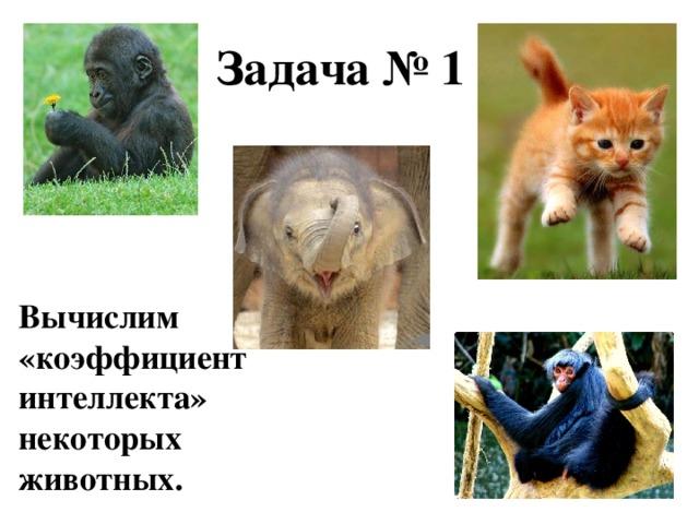 Задача № 1 Вычислим «коэффициент интеллекта»  некоторых животных.