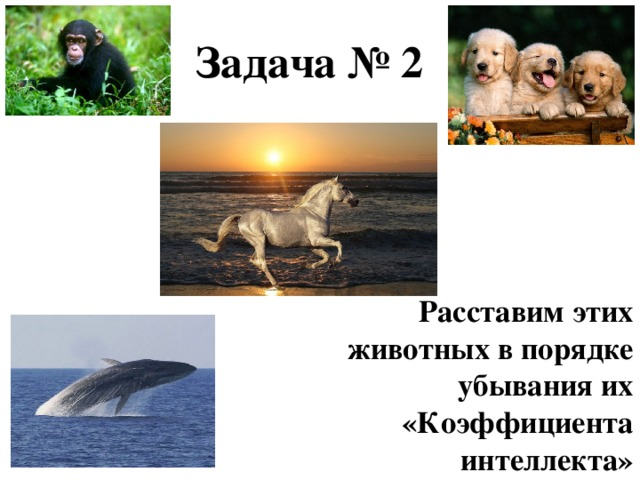Задача № 2 Расставим этих животных в порядке убывания их «Коэффициента интеллекта»