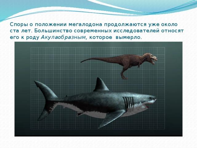Споры о положении мегалодона продолжаются уже около ста лет. Большинство современных исследователей относят его к роду Акулаобразным, которое вымерло.