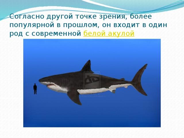Согласно другой точке зрения, более популярной в прошлом, он входит в один род с современной белой акулой