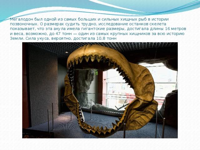 Мегалодон был одной из самых больших и сильных хищных рыб в истории позвоночных. О размерах судить трудно, исследование останков скелета показывает, что эта акула имела гигантские размеры, достигала длины 16 метров и веса, возможно, до 47 тонн— один из самых крупных хищников за всю историю Земли. Сила укуса, вероятно, достигала 10,8 тонн