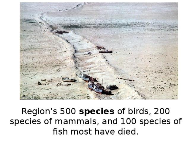 Region's 500 species of birds, 200 species of mammals, and 100 species of fish most have died.