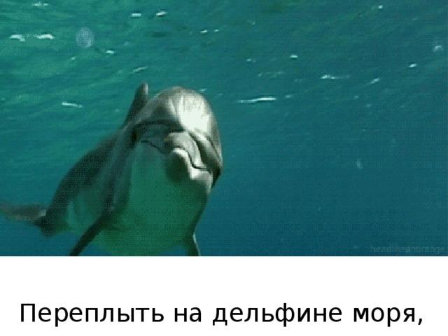 Переплыть на дельфине моря, океаны