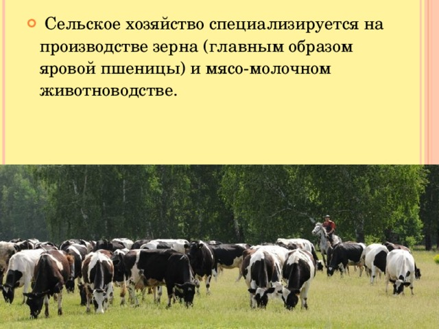 Сельское хозяйство специализируется на производстве зерна (главным образом яровой пшеницы) и мясо-молочном животноводстве.