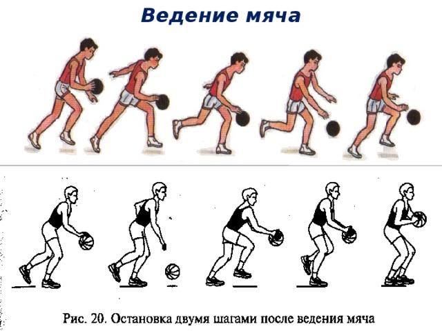 сосны техника ведения мяча в баскетболе с картинками миф создан основе