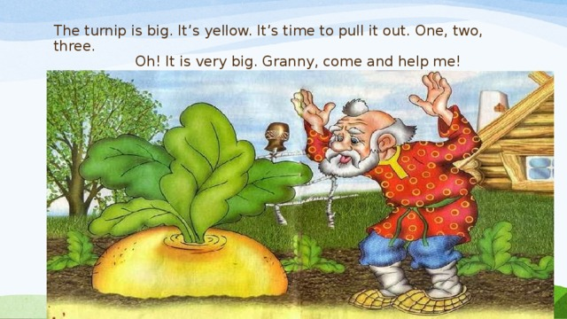 The turnip is big. It's yellow. It's time to pull it out. One, two, three.  Oh! It is very big. Granny, come and help me!