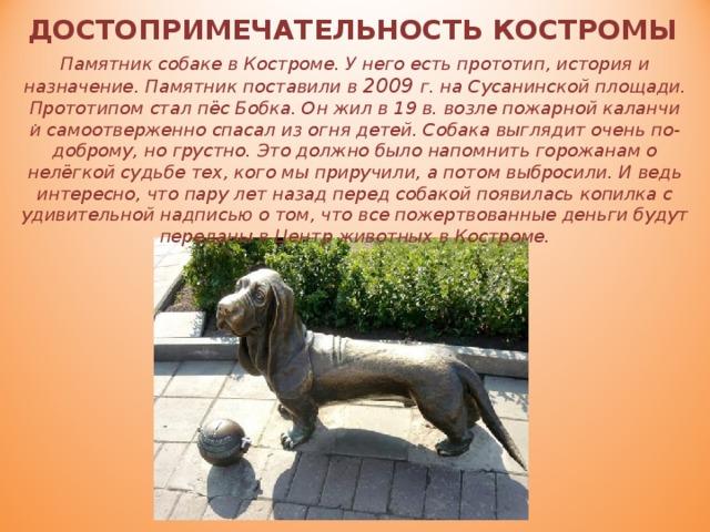 ДОСТОПРИМЕЧАТЕЛЬНОСТЬ КОСТРОМЫ Памятник собаке в Костроме. У него есть прототип, история и назначение. Памятник поставили в 2009 г. на Сусанинской площади. Прототипом стал пёс Бобка. Он жил в 19 в. возле пожарной каланчи и самоотверженно спасал из огня детей. Собака выглядит очень по-доброму, но грустно. Это должно было напомнить горожанам о нелёгкой судьбе тех, кого мы приручили, а потом выбросили. И ведь интересно, что пару лет назад перед собакой появилась копилка с удивительной надписью о том, что все пожертвованные деньги будут переданы в Центр животных в Костроме. .