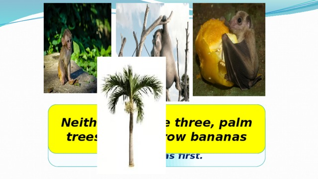 Neither of these three, palm trees do not grow bananas There were three animals around a palm tree. A hippo, a fruit bat and a monkey. Which one of these three got the bananas first.