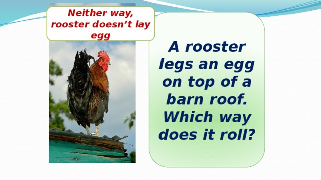 Neither way, rooster doesn't lay egg A rooster legs an egg on top of a barn roof. Which way does it roll?