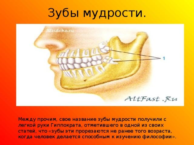 Зубы мудрости. Между прочим, свое название зубы мудрости получили с легкой руки Гиппократа, отметившего в одной из своих статей, что «зубы эти прорезаются не ранее того возраста, когда человек делается способным к изучению философии».