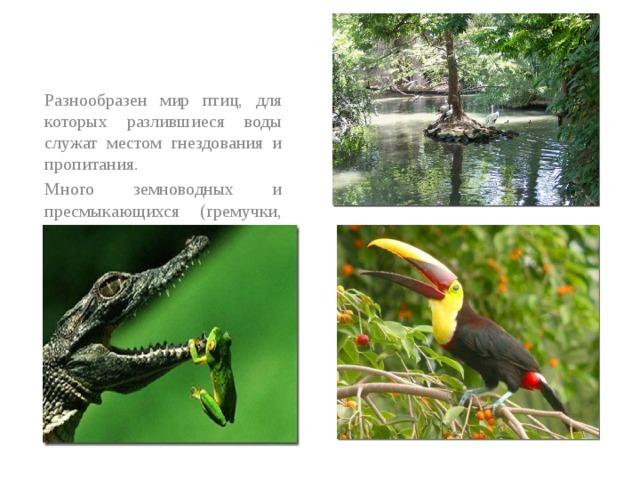 Разнообразен мир птиц, для которых разлившиеся воды служат местом гнездования и пропитания. Много земнoводных и пресмыкающихся (гремучки, удавы боа, анаконды), насекомые.