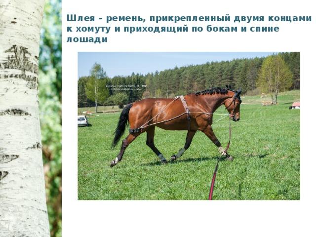 Шлея – ремень, прикрепленный двумя концами к хомуту и приходящий по бокам и спине лошади