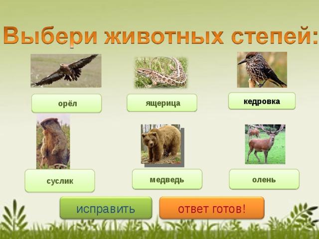 кедровка    ящерица     орёл http://cache.zr.ru/wpfiles/uploads/2011/09/201109151500_1827222_640px.jpg http://www.yaplakal.com/uploads/post-3-13178882186928.jpg медведь олень суслик ответ готов! исправить 8