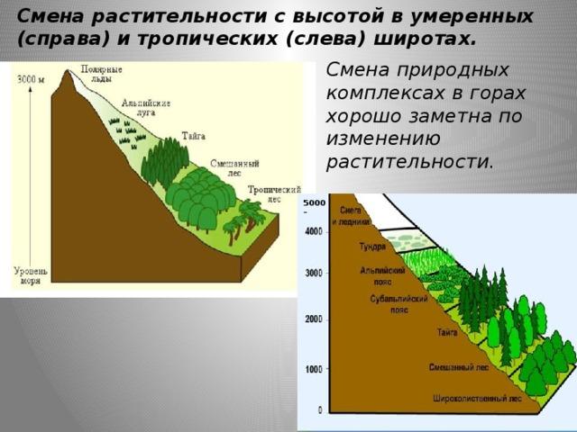Смена растительности с высотой в умеренных (справа) и тропических (слева) широтах. Смена природных комплексах в горах хорошо заметна по изменению растительности. 5000 –