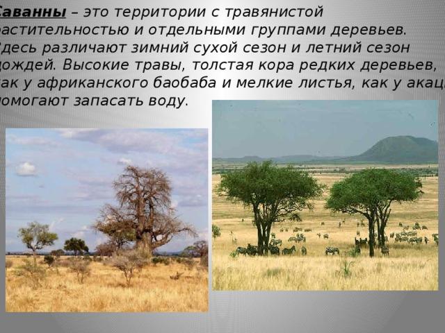 Саванны  – это территории с травянистой растительностью и отдельными группами деревьев. Здесь различают зимний сухой сезон и летний сезон дождей. Высокие травы, толстая кора редких деревьев, как у африканского баобаба и мелкие листья, как у акации помогают запасать воду.