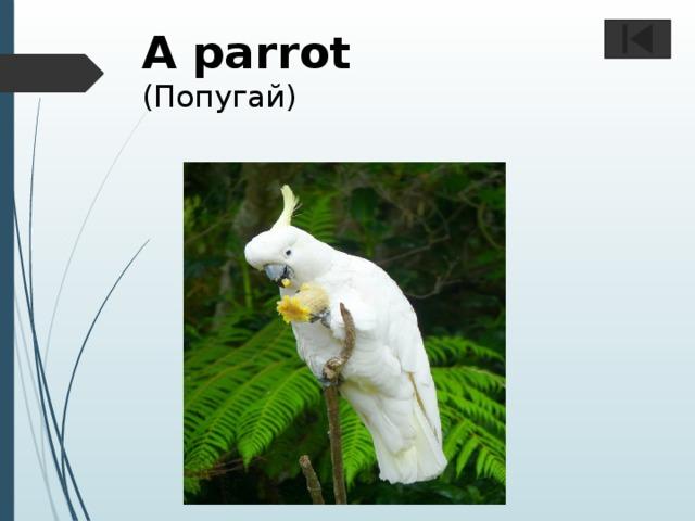 A parrot  (Попугай)