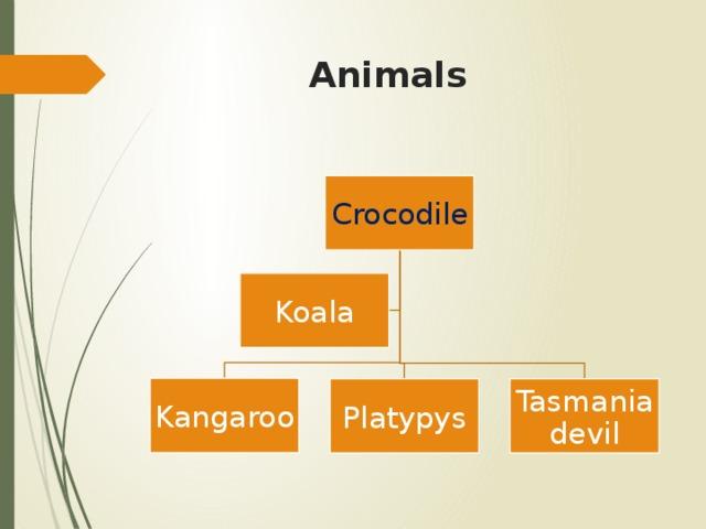 Animals Crocodile Koala Kangaroo Platypys Tasmania devil