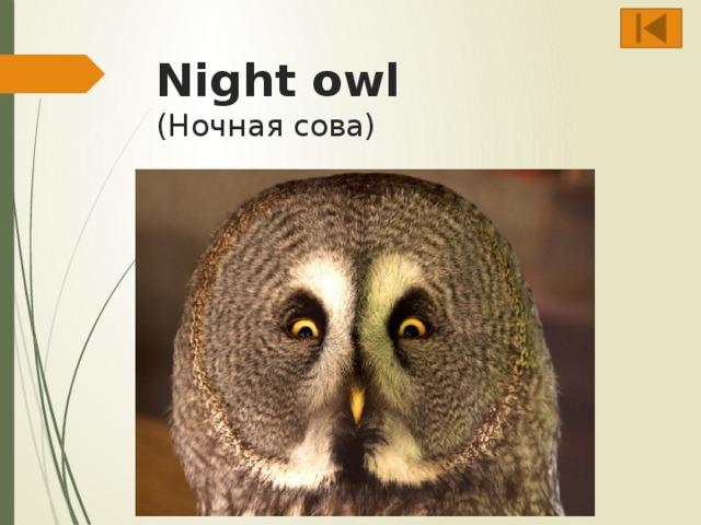 Night owl  (Ночная сова)