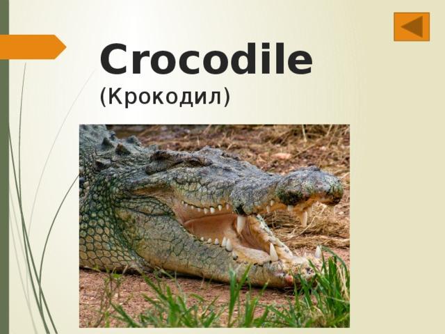 Crocodile  (Крокодил)