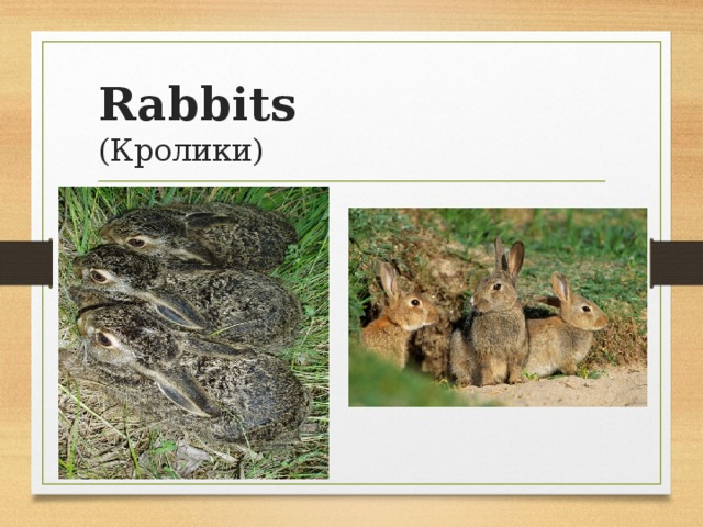 Rabbits  (Кролики)