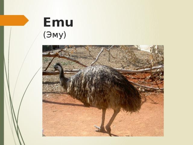 Emu  (Эму)