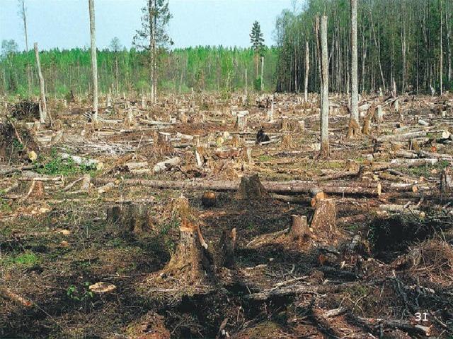 Тревож Экологическая проблема