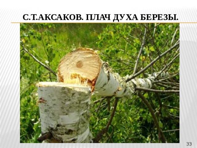 С.Т.Аксаков. Плач духа березы. 33